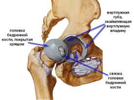 Суставная губа вертлужной впадины полиартрит поражение плечевых суставов