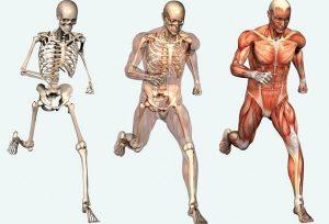 Что лечит спортивный ортопед